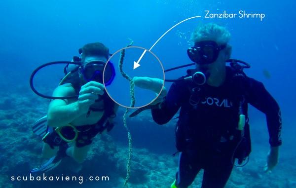 Underwater Naturalist Dive